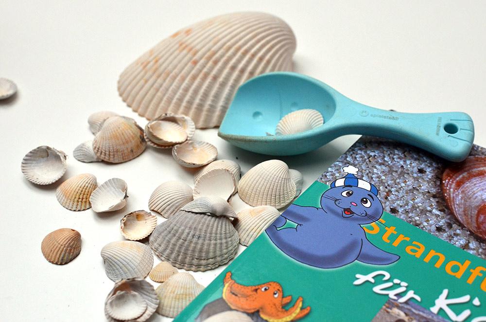 was machen mit gesammelten Muscheln vom Strand?