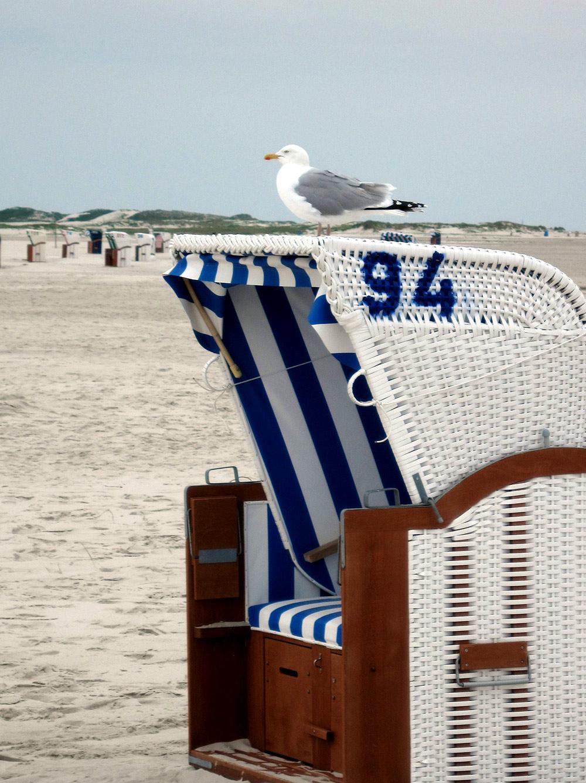 Möwe auf Strandkorb, Amrum