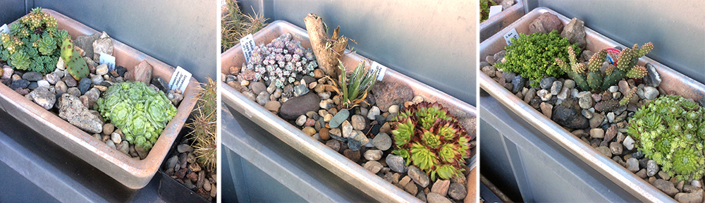 Kaktus, hauswurz & Co outdoor im Balkonkasten