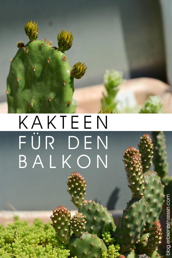Outdoor-Kakteen für den Balkon: Pflanzen-Tipps und Standort